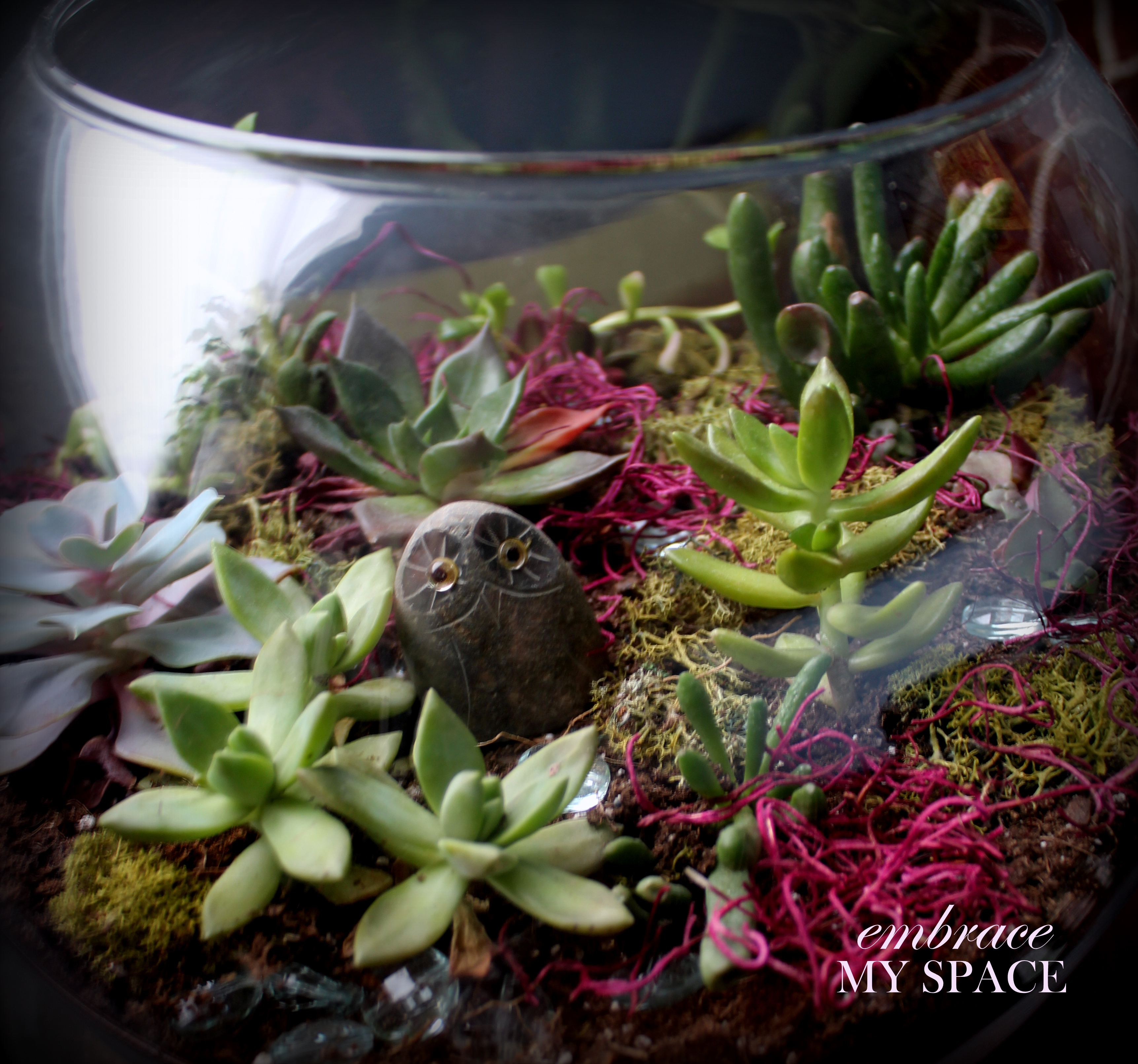 Why Buy When You Can Diy Succulent Terrarium Embrace My Space